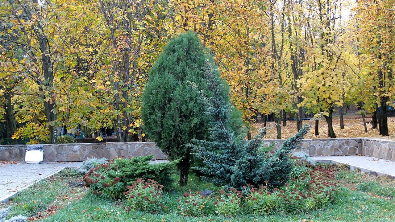 деревья декор